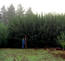 Biomass tree farm